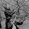 Teaching pruning to GI Bill group